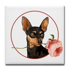 Min Pin Rose