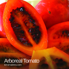 Arboreal tomato or tamarillo, is a fruit with oval or spherical shape. It's skin can be red or yellow. The pulp is very juicy and is rich in vitamins and minerals. #terramadeira