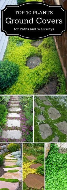 10 Plants and Ground Cover for Your Paths and Walkways Top 10 plants that provide excellent ground cover.Top 10 plants that provide excellent ground cover. Plantation, Shade Garden, Lawn And Garden, Big Garden, Water Garden, Herb Garden, Garden Planning, Backyard Landscaping, Landscaping Ideas
