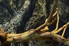 Angelo Musco - Phloem (2010); Fabrice Samyn - From the Olive Tree Garden #5 (2013)