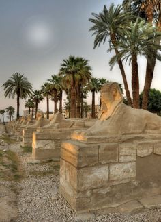 ♔ A row of sphinxes ~ Luxor ~ Egypt