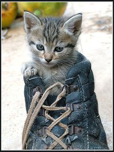 Puss in boot <3