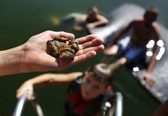 Zebra mussels suspected in Joe Pool Lake.