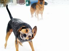 Upload your best active weather photos and videos or watch them in our new searchable gallery. Weather Network, Snow Dogs, Photo And Video, Gallery, Face, Photos, Animals, Pictures, Animais