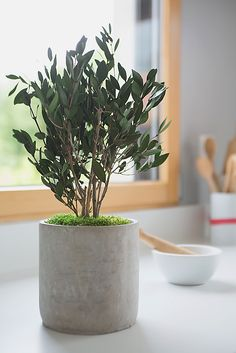 Design végétal, plantes stabilisées.Création et réalisation Adventive. Interior plant Designer.  #mousse #moss #designvegetal