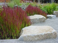 Japanese Blood Grass, another great low-maintenance plant for easy-care gardening. It's in our book 'Gardening from a Hammock.com' along with 300 more. See them at www.GardeningfromaHammock.com