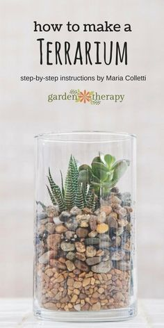 How to make a terrarium. Once you have this basic design down, it gives the you the opportunity to interpret a terrarium garden many times over and to with your own vision. The colors of the stones can be changed, the succulents used are easy enough to b Mini Terrarium, How To Make Terrariums, Terrarium Wedding, Succulent Terrarium Diy, Indoor Succulent Garden, Succulent Landscaping, Landscaping Design, Garden Landscaping, Air Plants