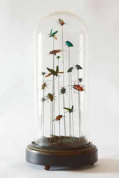 Insects in glass dome
