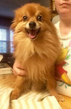 Meet Wilson, an adopted Pomeranian Mix Dog, from JoJo's DogHouse in Gallatin, TN on Petfinder. Learn more about Wilson today. Pug Names, Pomeranian Mix, Dog Diet, Freezing Cold, Baby Carrots, Dog Houses, Rescue Dogs, Dog Food Recipes