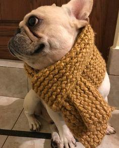 Roberto the Chic French Bulldog