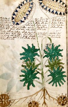 """The Voynich Manuscript is """"the book that cannot be read."""" Dating from it has defied all attempts to decode it. Voynich Manuscript, Medieval Manuscript, Illuminated Manuscript, Botanical Illustration, Botanical Prints, Artist Journal, Visual Diary, Nature Journal, Handmade Books"""