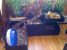 Hedgehog Pet Supplies