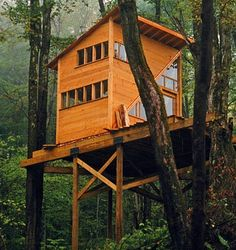 Ive always wanted a home on stilts in the woods.. think of the views! And no need for curtains!!