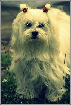 Beautiful dog!! Save up to 50% on all pet supplies at Petmountain.com !! #Petm