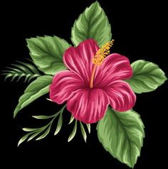 Hand Painted Hibiscus Flower, Flower Clipart, Hibiscus Flower, Flowers PNG Transparent Image and Cli Hawaiian Flowers, Hibiscus Flowers, Tropical Flowers, Hawaiian Flower Drawing, Hibiscus Flower Drawing, Hawaiian Flower Tattoos, Hawaiian Art, Fabric Painting, Watercolor Art