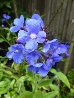 Blue Garden, Summer 3, Purple Flowers, Pretty, Plants, Blue Flowers, Beautiful Flowers, Small Flowers, Plant