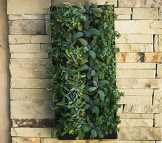 vertical garden for the fence behind my veggie garden. thinking of putting the herbs in here for easy access