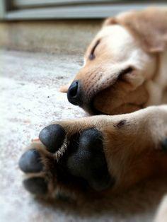 puppy paws <3