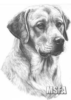 golden labrador print by mike sibley