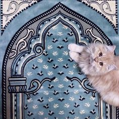 ♡ — Islam has put great importance on the virtue of. Islamic Wallpaper Hd, Mecca Wallpaper, Quran Wallpaper, Cat Wallpaper, Baby Animals, Cute Animals, Animals And Pets, I Love Cats, Cute Cats