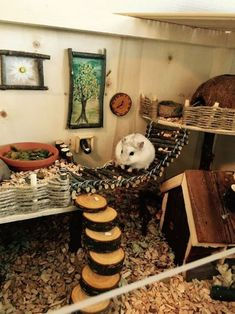 My dwarf hamster Charles - Hamsters Habitat Du Hamster, Dwarf Hamster Toys, Hamster Bin Cage, Diy Hamster Toys, Gerbil Cages, Hamster Life, Robo Dwarf Hamsters, Hamster Stuff, Hampster Cage
