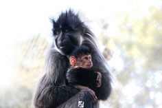 Mother Embracing by Hichemou Photographer , Colorism And Designer on 500px