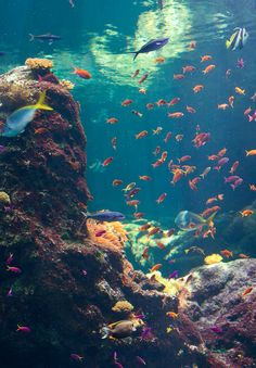 underwater // under the sea // snorkeling // SCUBA diving // exotic fish // blue water // tropical // coral reef Underwater Photography, Nature Photography, Underwater Images, Ocean Underwater, Fauna Marina, Photo Voyage, New Backgrounds, Deep Blue Sea, Ocean Creatures