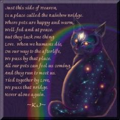 rainbow bridge for cats - Yahoo Image Search Results Stray Cats, Cats And Kittens, Kitty Cats, Cat Quotes, Animal Quotes, Animal Poems, Animal Funnies, Qoutes, Rainbow Bridge Cat