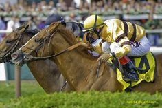 WISE DAN, Morton Fink's reigning two-time Horse of the Year, returned from a 15-week layoff to hold off late-running long shot Optimizer and win the Grade 2, $250,000 Bernard Baruch Handicap by a nose at Saratoga Race Course. It was the third win in as many races this year for the 7-year-old Wiseman's Ferry gelding,