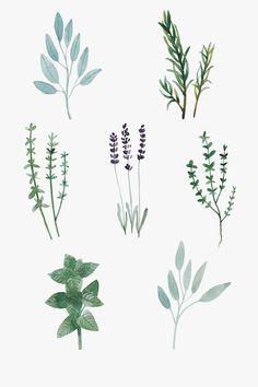 Herbs  Illustration by Toma Kurkova  #herbs #watercolor #rosemary #mint