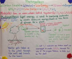 Mrs. Paul - Biology: Photosynthesis GLAD Anchor Charts Notes