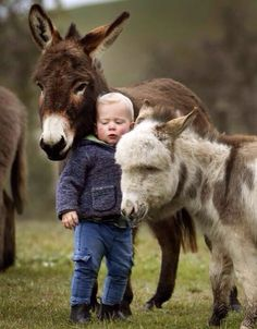 so sweet, miniature ponies and a donkey.