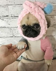 """See our web site for more relevant information on """"black pug puppy"""". It is actually an excellent location to learn more. Pug Puppies For Adoption, Cute Dogs And Puppies, Bulldog Puppies, Terrier Puppies, Boston Terrier, Doggies, Lab Puppies, Black Pug Puppies, Cute Baby Pugs"""