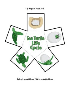 Sea Turtle Life Cycle from The K-2 Guru on TeachersNotebook.com (48 pages)