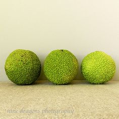 Green Natural Home Decor Hedge Apples Still Life by ninedragons