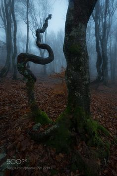 Snake by JulienDelaval. Please Like http://fb.me/go4photos and Follow @go4fotos Thank You. :-)