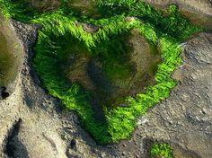 La nature fait des cœurs