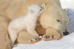 Secret to share. Humano o Criatura...ser madre es los mas lindo...