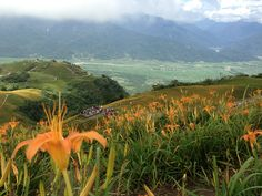 2016 六十石山金針花季︱  Taiwan