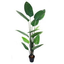 Cheap Furniture | Furniture Sale | Temple & Webster Fake Plants, Types Of Plants, Artificial Plants, Artificial Tree Stand, Banana Leaf Tree, Trees To Plant, Plant Leaves, Spiral Tree, Tree Care
