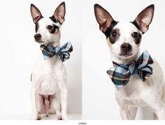 Ready and willing.       Supermodel Pets: Richard Phibbs' Humane Society Adoption Portraits