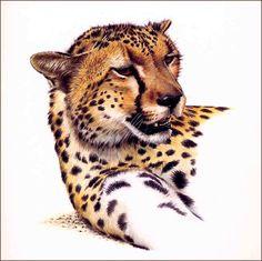 Cheetah. Cheetah Birthday, Cheetahs, Grumpy Cat, Big Cats, Cat Art, Pet Birds, Conservation, Lions, Cute Animals