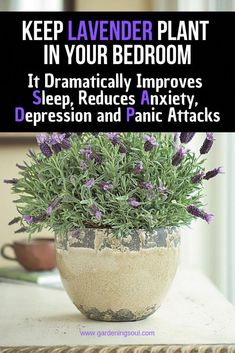 Keep Lavender Plant in Your Bedroom: It Dramatically Improves Sleep, Reduces Anxiety, Depression and Panic Attacks Halten Sie Lavendel in Ihrem Container Plants, Container Gardening, Gardening Tips, Indoor Gardening, Organic Gardening, Vegetable Gardening, Ivy Plants, Garden Plants, Flowering Plants