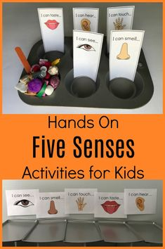 Sensory-based activities are the ultimate way to bring playful learning explorations to preschoolers. Using all 5 senses in learning activities promotes problem-solving skills and investigation… Five Senses Preschool, 5 Senses Activities, My Five Senses, Body Preschool, Preschool Science Activities, Sorting Activities, Kindergarten Science, Preschool Themes, Preschool Lessons