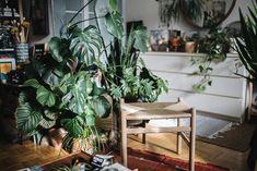 Homestory Happy Interior Blog – Pflanzenfreude.de