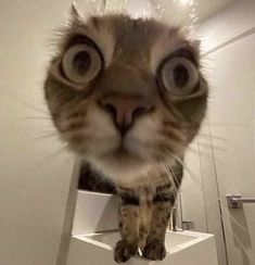 Baby Cats, Cats And Kittens, Baby Animals, Funny Animals, Cute Animals, Kittens Cutest, Selfie Gato, Gatos Cool, Ugly Cat