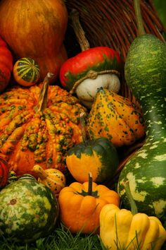 Autumn in Donji Andrijevci village in Slavonia, Croatia Copyright: Josip Saric