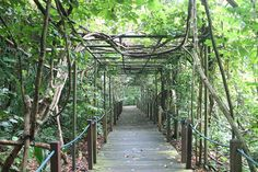 The Singapore Botanic Gardens - a must do if you are spending 2 days in Singapore