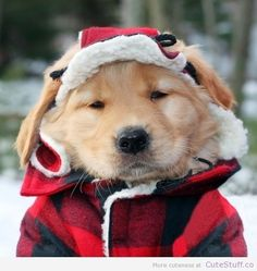 Cutie doggie in red /black plaid coat and hat