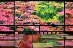 八瀬の蓮華寺・瑠璃光院 Beautiful Places In Japan, Beautiful World, Beautiful Gardens, Japanese Travel, Japan Garden, Japanese Landscape, Japan Photo, Colorful Trees, Kyoto Japan